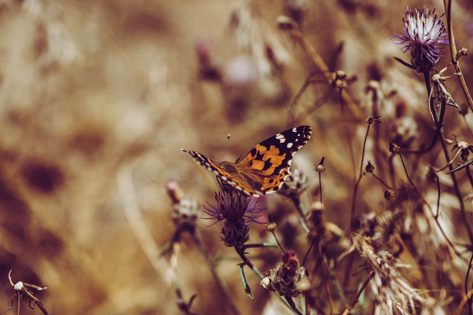 La naturaleza es sabia, dejemos que nos ayude © Las Recreativas