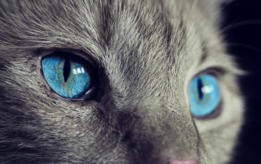 Los gatos son más aseados, pero eso no significa que no haya que bañarles