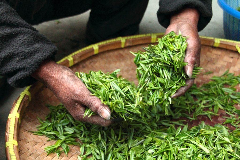 Los antioxidantes del té verde permiten a nuestro cabello alcanzar más fuerza y vigor